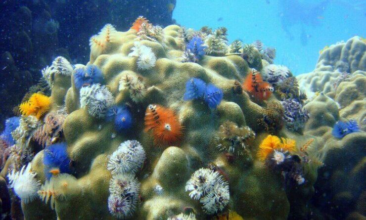 ecología acuática