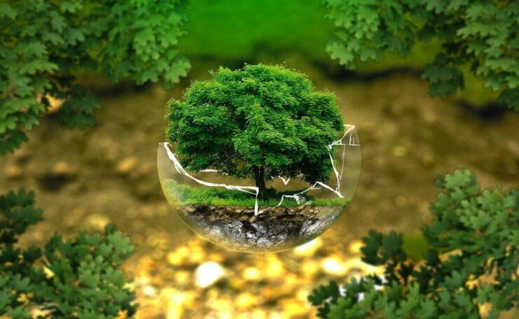 ecología de la conservación